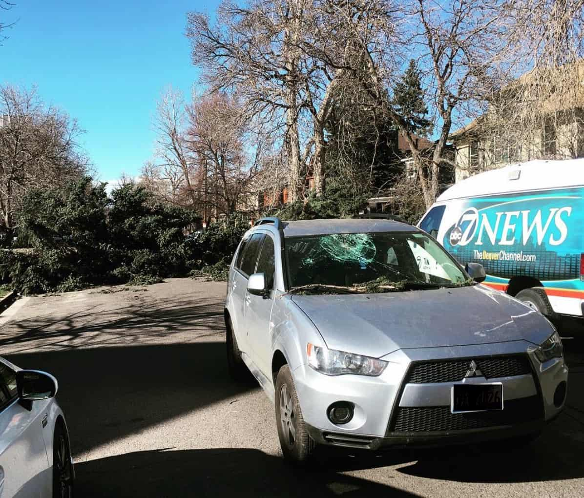 a picture of a tree hitting a car